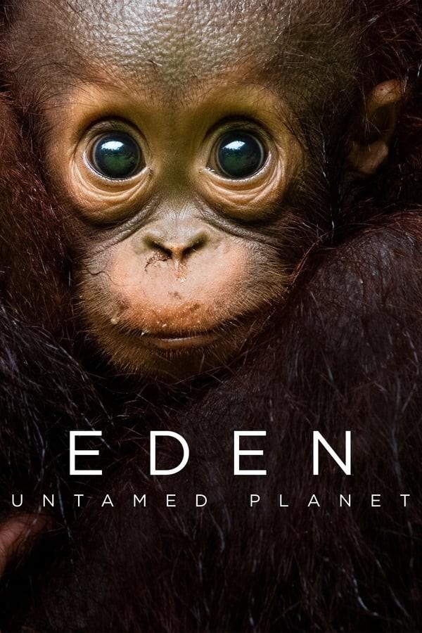 [伊甸园:最后的秘境 Eden: Untamed Planet 第一季][全6集]4K|1080P高清